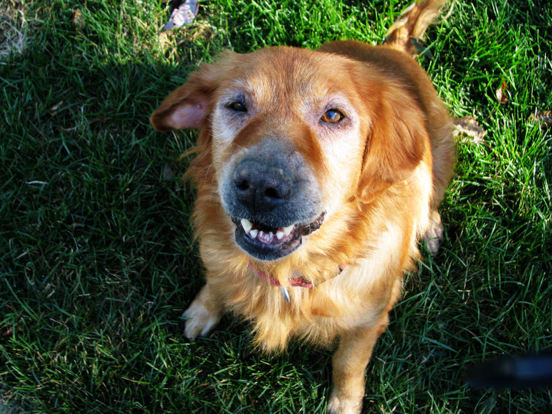 Chase Oct 30 08 ps