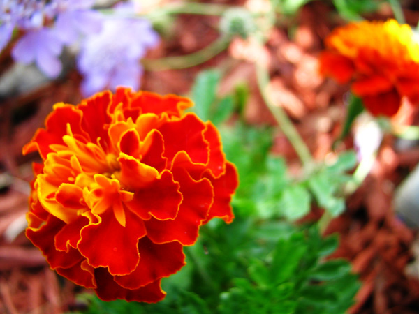 Garden tp 15