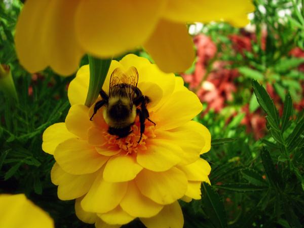 Bee tp 1