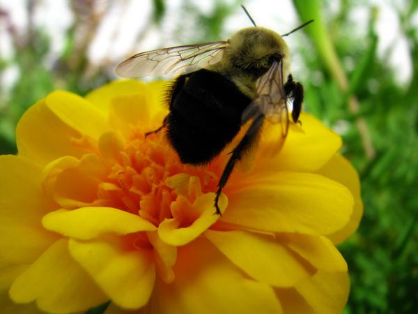 Bee tp 2