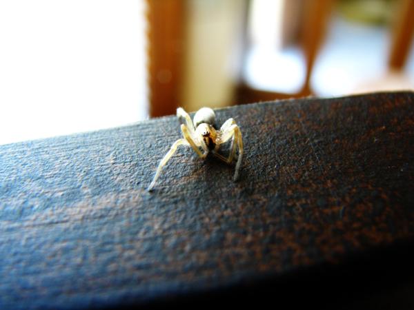 Spider tp 1
