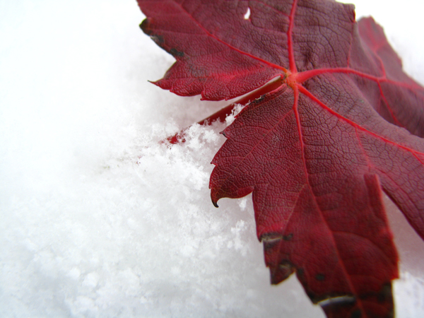Snow tp 2