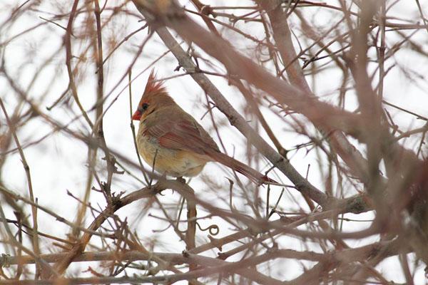 Cardinal tp 3