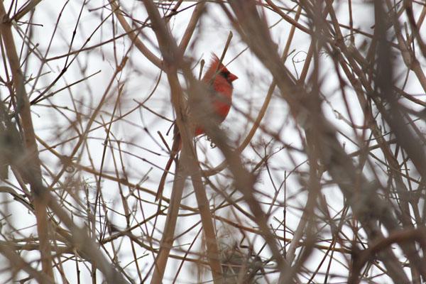 Cardinal tp 4