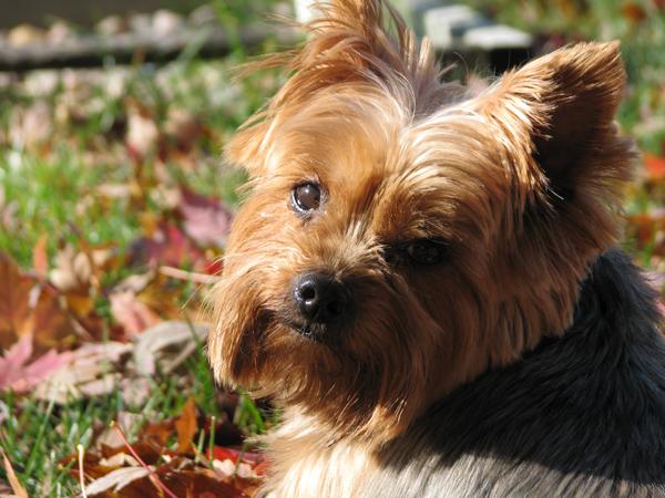 Dog tp 12