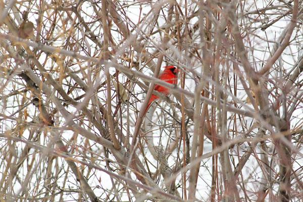 Cardinal tp 1