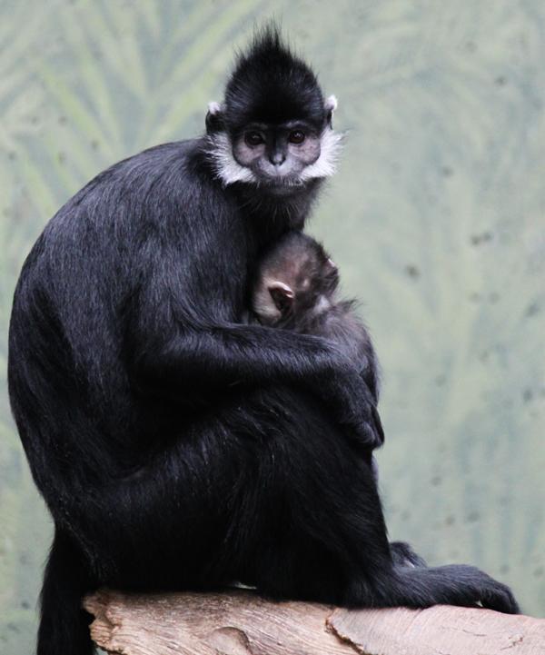 Zoo tp 8