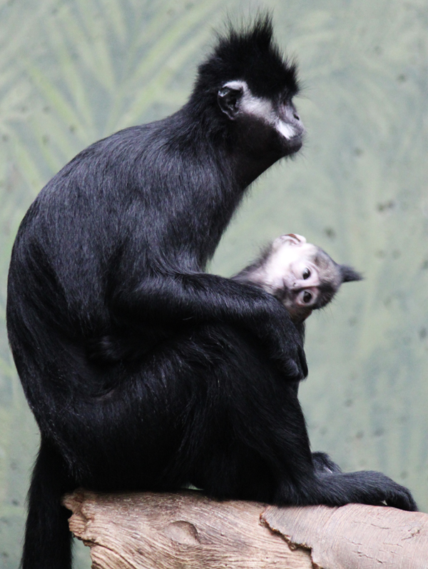 Zoo tp 10