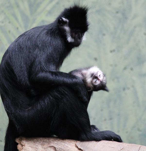 Zoo tp 11