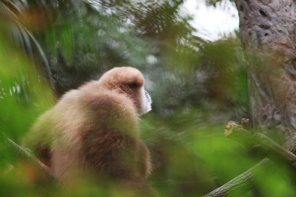 Zoo tp 3