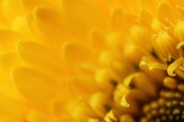 Flowers tp 2