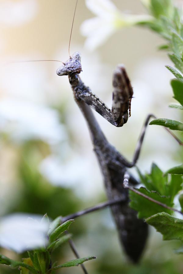 Mantis tp 2