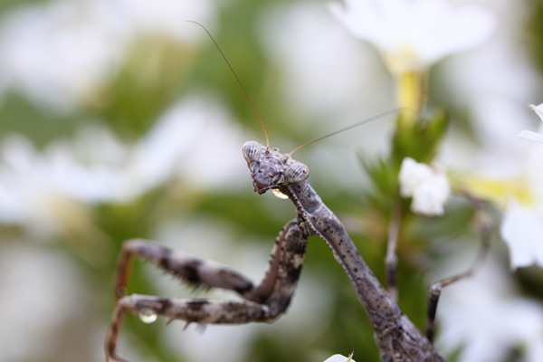 Mantis tp 5