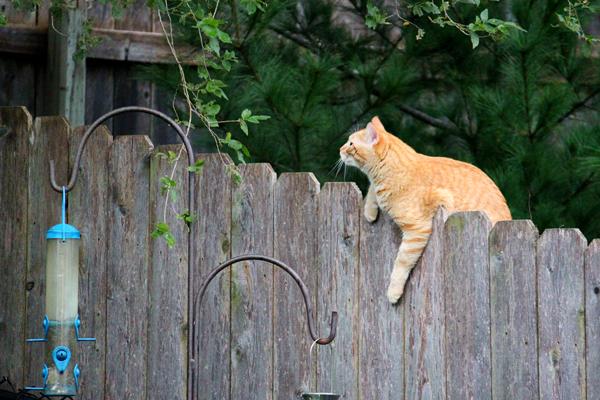Cat tp 6