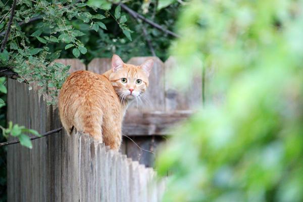 Cat tp 3