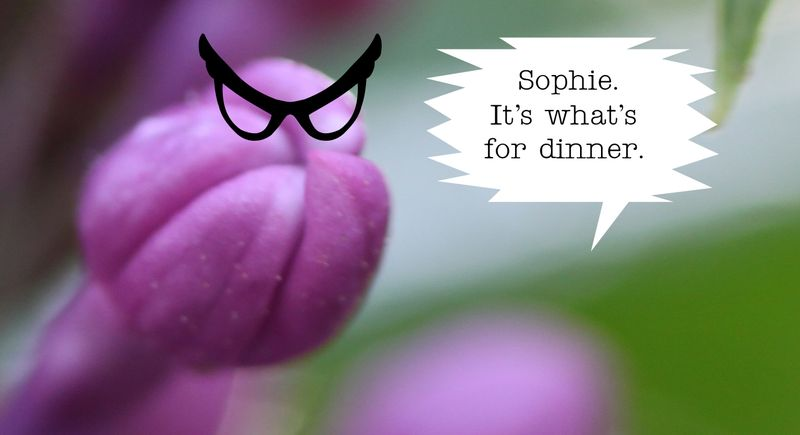 Lilacs tp 7