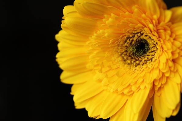 Flowers tp 3