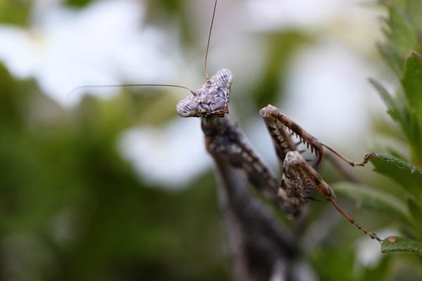Mantis tp 3