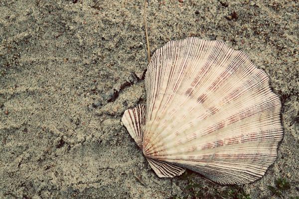 Sea hag tp 4
