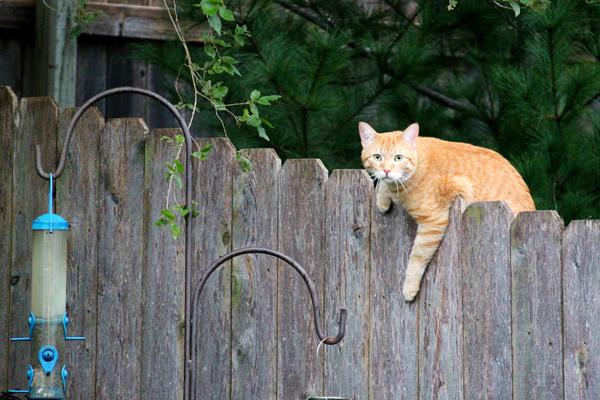 Cat tp 5