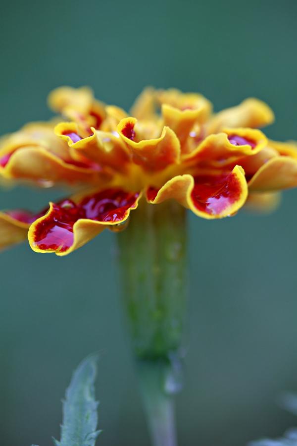 Flower tp 3