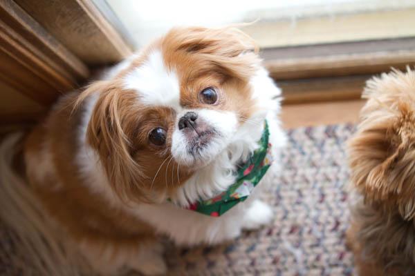 December Dogs2